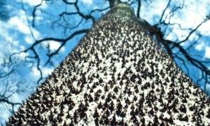 hutan amazon dynamite trees