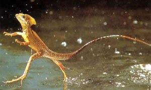 hewan hutan amazon the jesus lizard